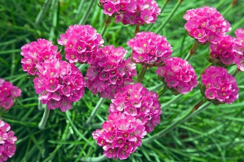 Відмінне рішення: 7 квітів в саду, які не потрібно поливати