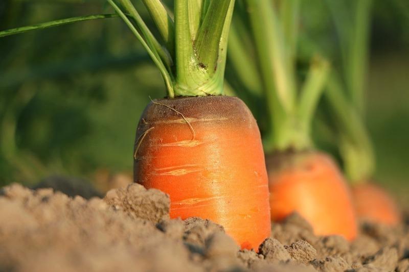 Ще встигнемо зібрати урожай: які рослини не пізно посадити в липні