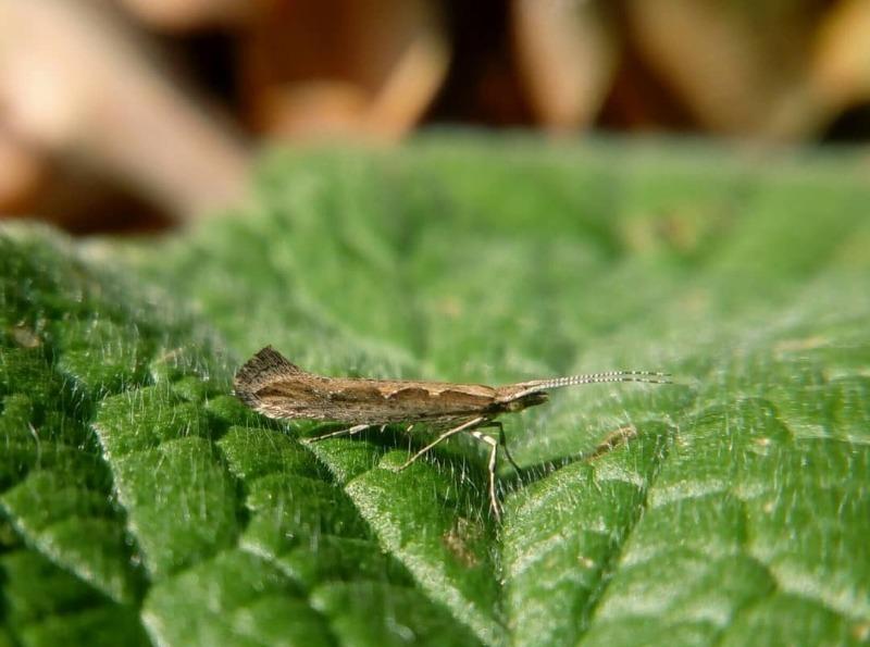 Шкідників потрібно знати в обличчя: 7 небезпечних комах для капусти
