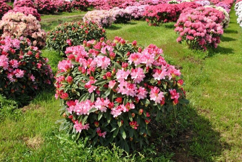 6 екзотичних рослин, які можна легко виростити в підмосковї