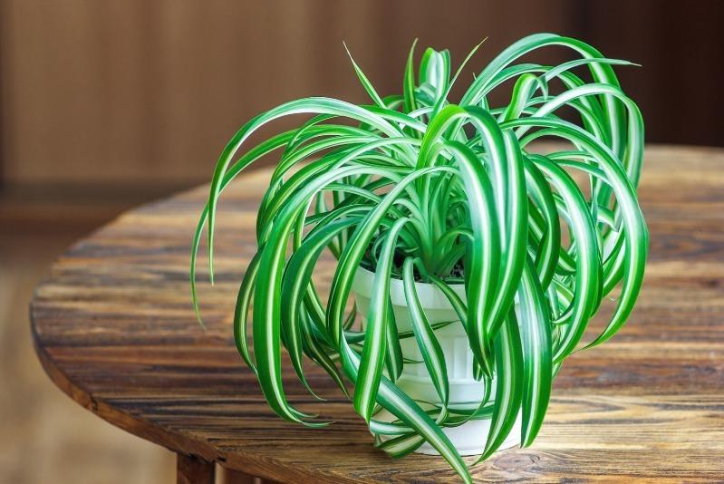 8 домашніх рослин, які можна не поливати цілий місяць