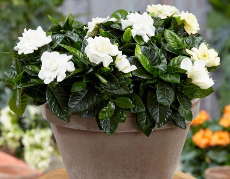5 рослин і квітів, які допоможуть вам висипатися