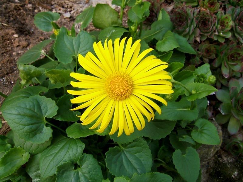 8 самих невибагливих садових квітів, які досить просто посадити або посіяти
