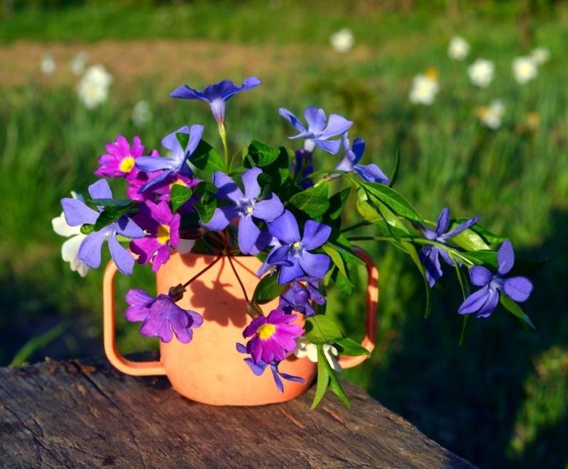 11 рослин-оберегів від поганого пристріту і бід