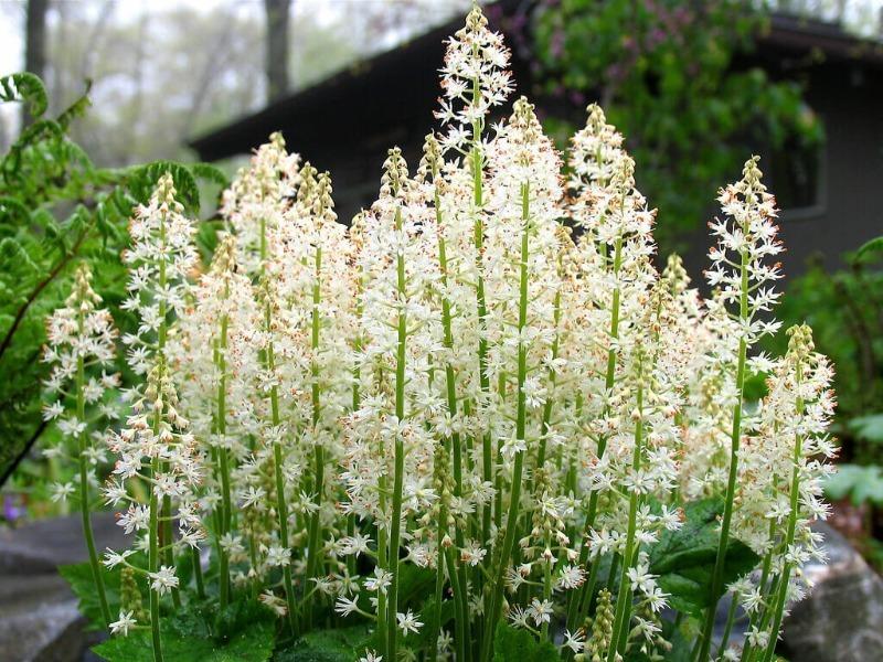 Які рослини підійдуть для білої сонячної клумби