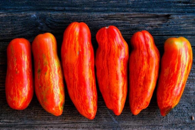 5 моїх улюблених сортів довгоплідних помідорів, які я саджу щороку