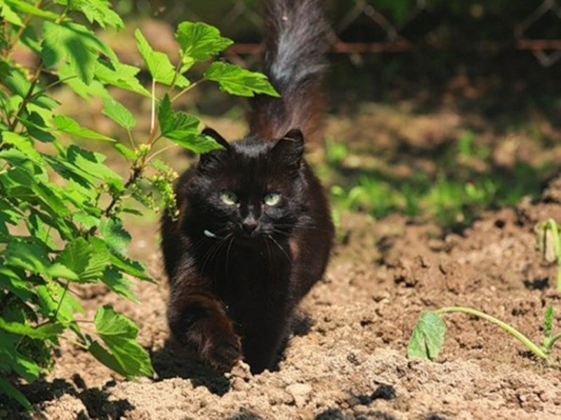 Підживлення рослин, знищення мурах і ще 9 способів застосування кавової гущі