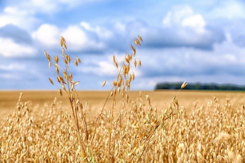 7 рослин, які розкислюють грунт не гірше золи