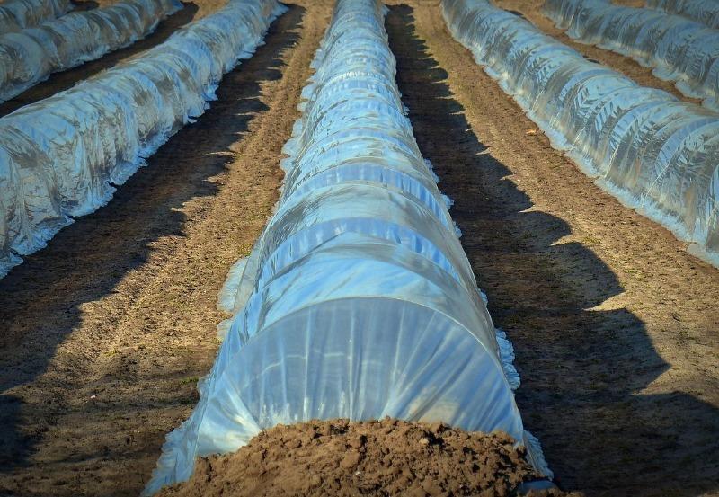 Як зібрати картоплю в липні: 6 тонкощів раннього врожаю