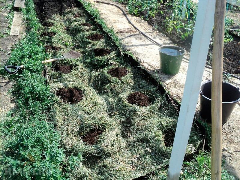 6 корисних застосувань трави, скошеної на газоні