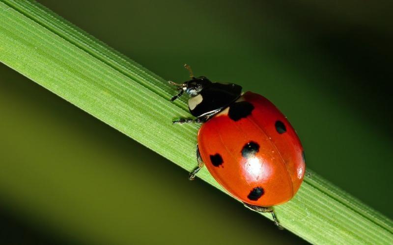 Рослини, комахи та птахи, які позбавлять ділянку від колорадського жука