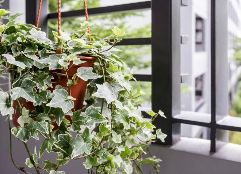 10 отруйних рослин, які швидше за все стоять у вашому домі