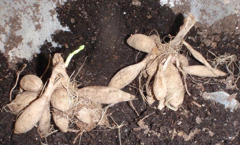 8 справ, якими кожен садівник повинен зайнятися взимку