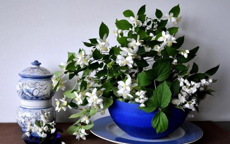 Поставте на робочий стіл: 8 рослин, які допоможуть вам забути про стрес