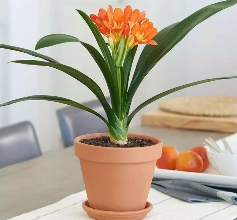 7 кімнатних квітів, догляд за якими вимагає мінімальної кількості часу