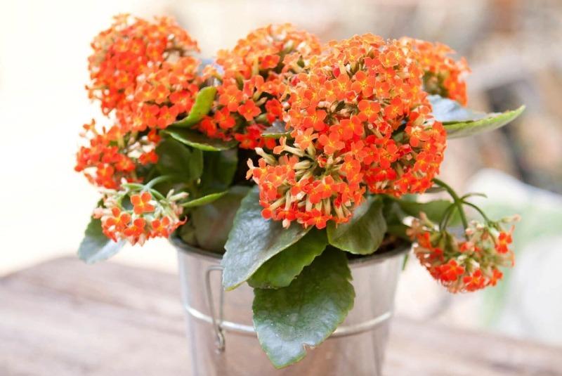 12 кімнатних рослин, з якими впорається навіть самий ледачий садівник