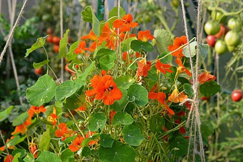 5 кольорів, які відлякують шкідників з городу