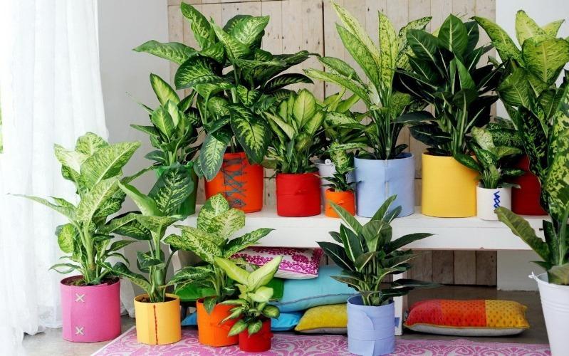 9 кімнатних рослин, які можуть рости в будь-якому місці вашого будинку, навіть без сонця