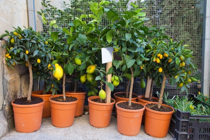 11 фруктів і овочів, які ви можете виростити на підвіконні будинку