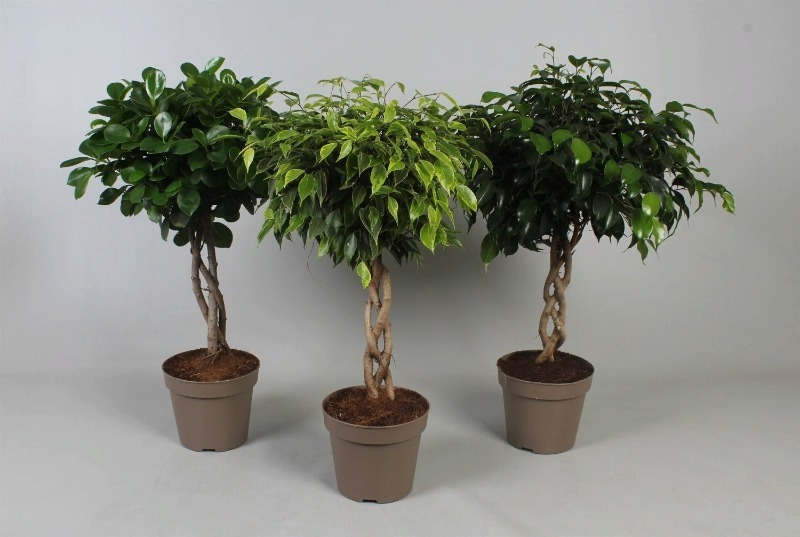 7 рослин, які не пропадуть навіть у самих ледачих господинь