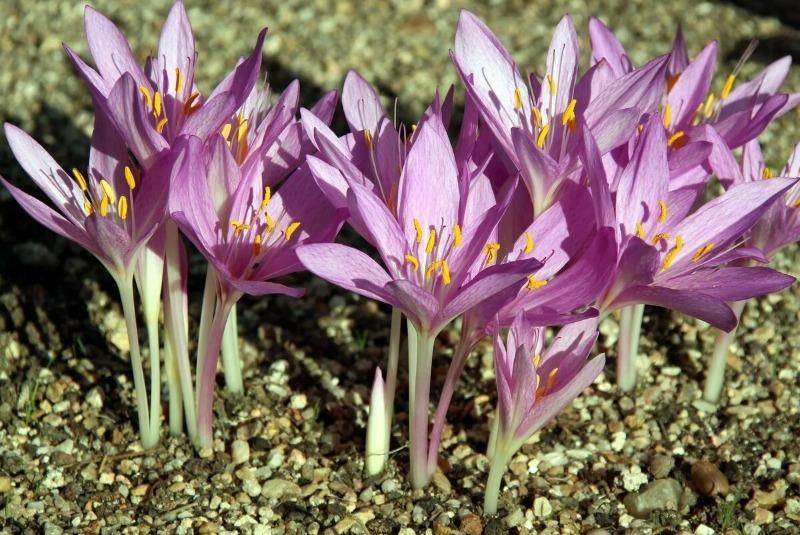 9 рослин, які прикрашатимуть ділянку до пізньої осені