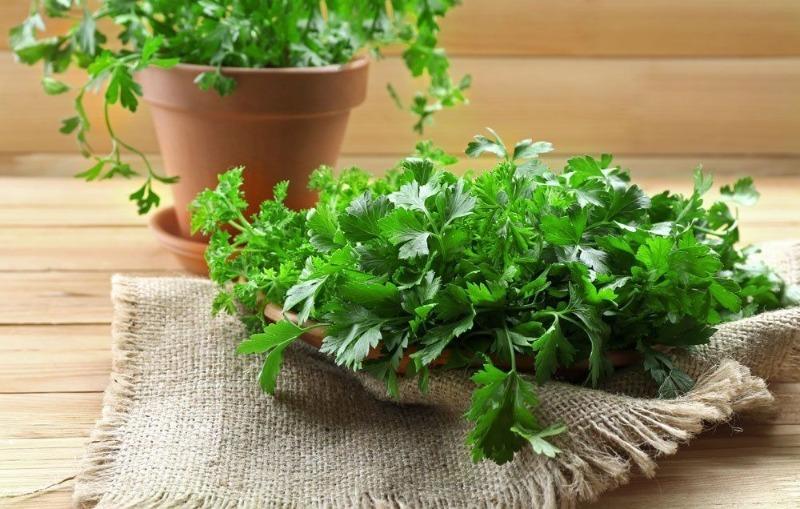 8 ароматних трав, які можна вирощувати вдома на підвіконні