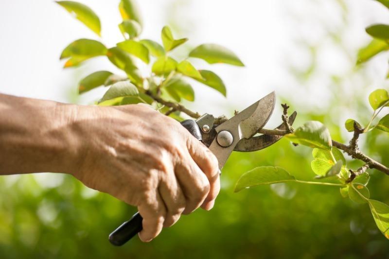12 рослин, які обробляють від шкідників на початку квітня