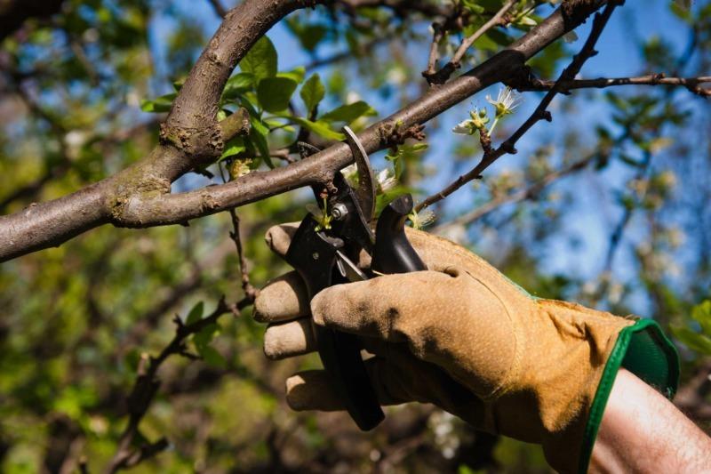 В саду і городі: 9 важливих справ, про які не можна забувати в серпні