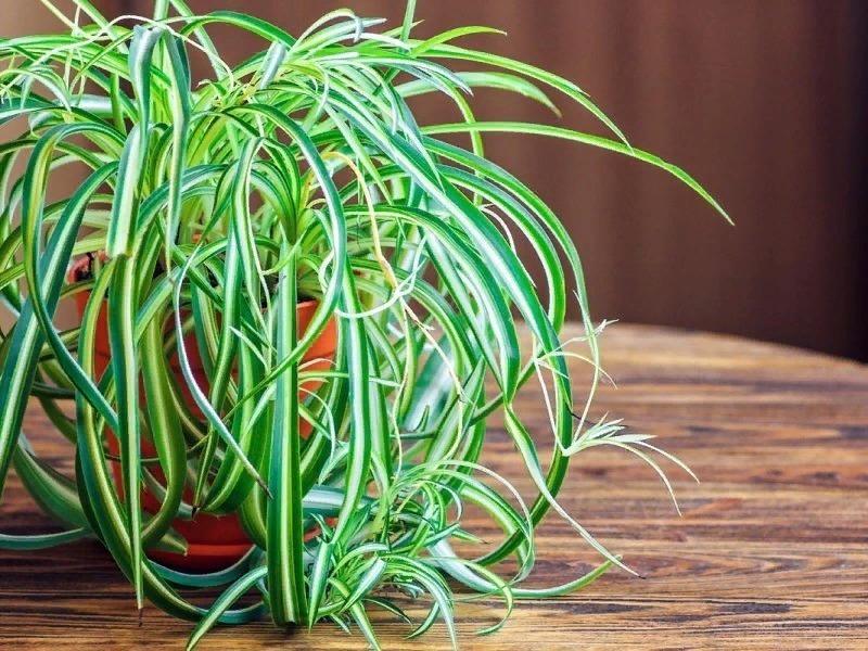 7 рослин для дому, які виживуть навіть у темному кутку