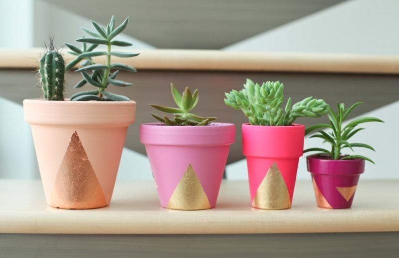 7 порад любителям кімнатних рослин, які спростять життя вашим квітам