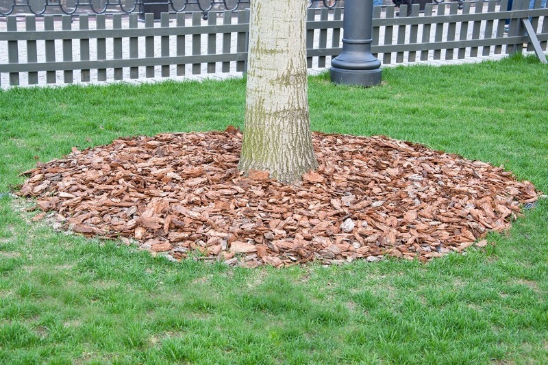 7 органічних видів мульчі для укриття пристовбурного кола дерева