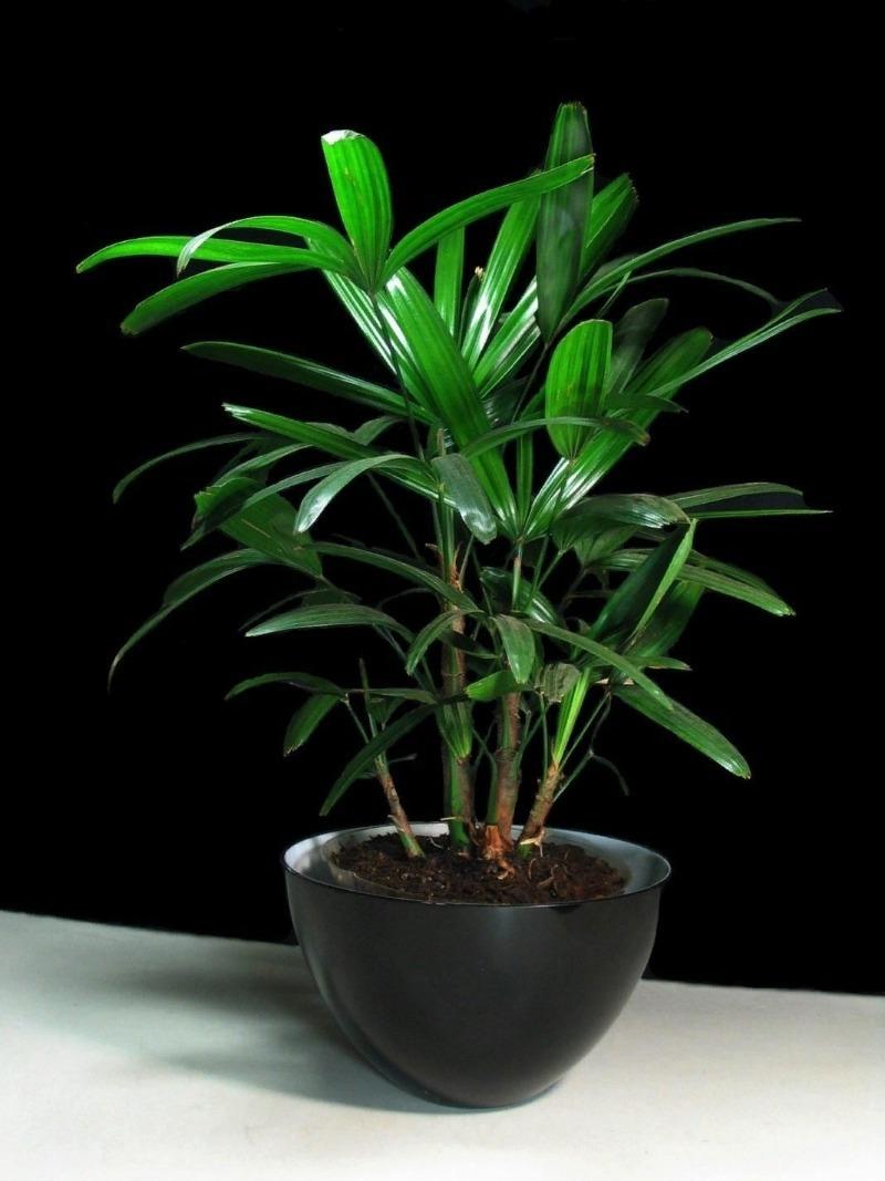 Nasa схвалив: 10 найкращих рослин для очищення повітря у вашому домі