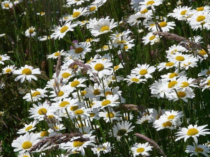Які квіти, принесені з лісу, візьмуться у вас на дачі