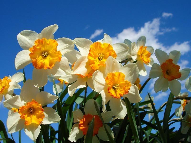 11 невибагливих квітів, які чудово підійдуть початківцям садівникам