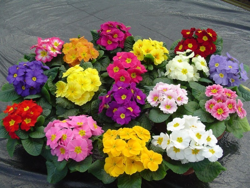 11 квітів, які потрібно сіяти на розсаду в грудні і січні