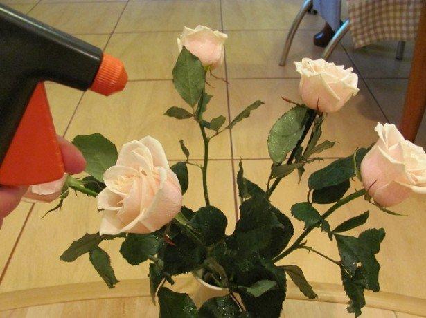 Як довше зберегти зрізані троянди у вазі