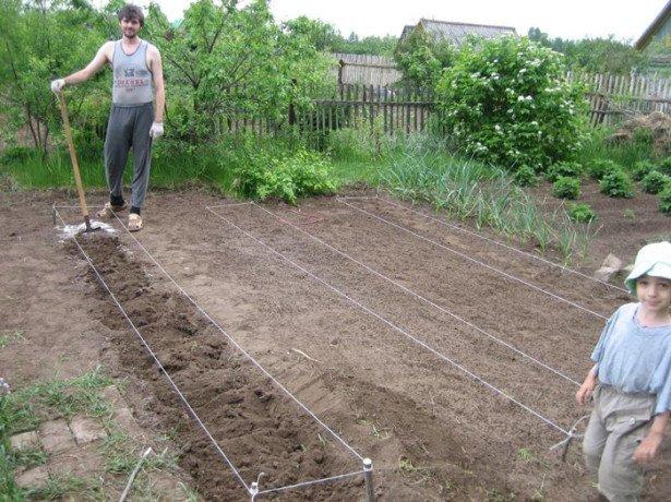Метод мітлайдера для вирощування високого врожаю картоплі
