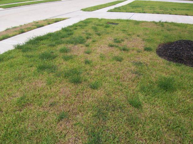 Чудовий газон влітку: чим підгодувати