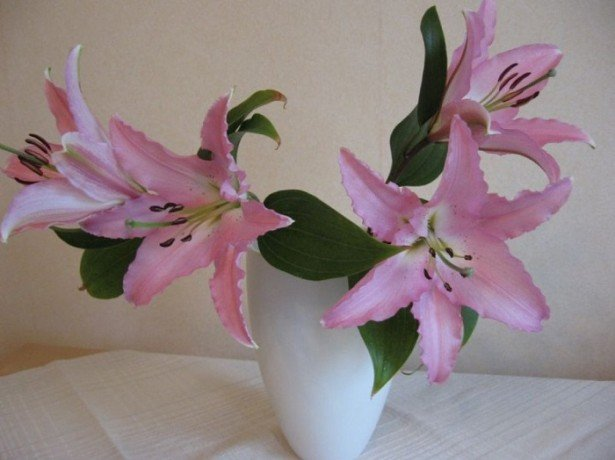 Чи потрібно обрізати лілії після цвітіння і викопувати цибулини на зиму?