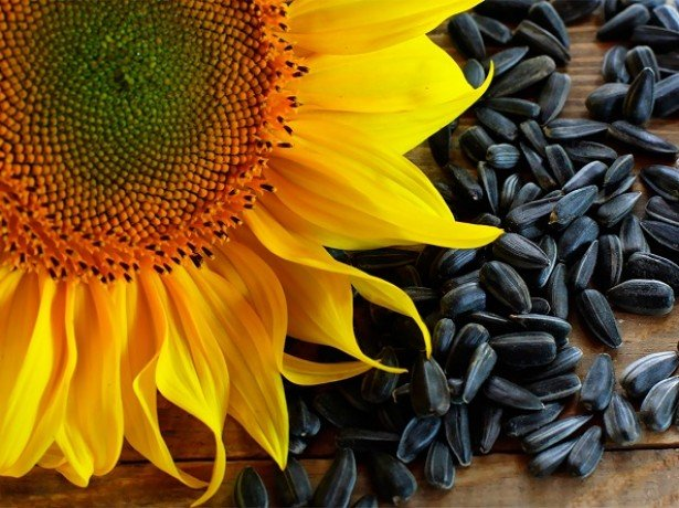 Чи корисні насіння соняшнику або від них більше шкоди організму