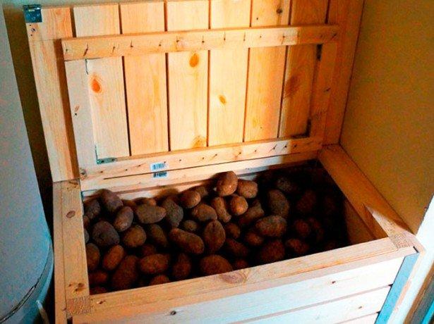 Корисні поради щодо зберігання картоплі на балконі або в погребі
