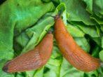Розсада гарбуза: від відбору насіння до висадки на грядку
