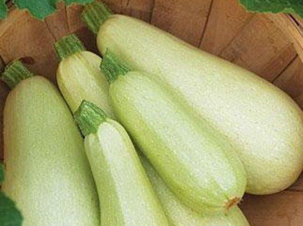Білоплідні кабачки: популярні сорти і вирощування
