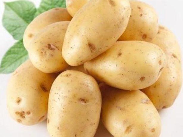 Картопля імператриця починає і виграє
