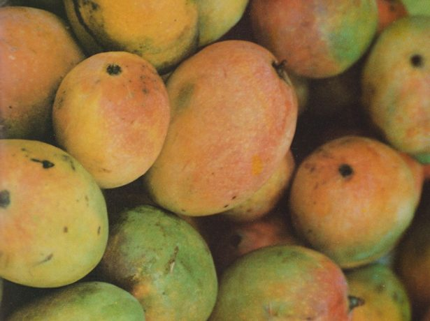 Сорти і різновиди манго