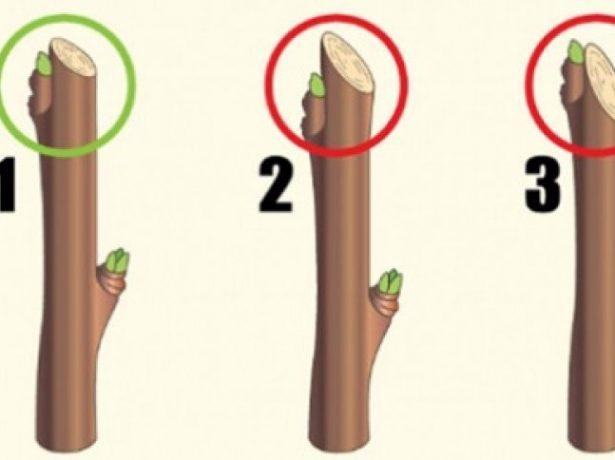 Як обрізати смородину навесні: рекомендації для початківців садівників