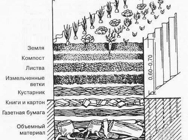Ранній і компактний-огірок кущовий