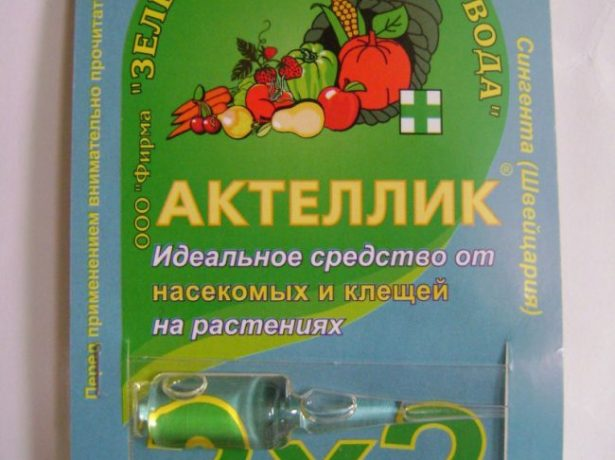 Обробка полуниці навесні від хвороб і шкідників