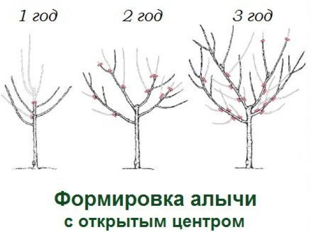 Алича гек-урожайна і невибаглива російська слива