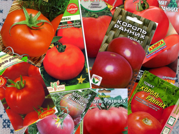 Король ранніх-томат скоростиглий і великий